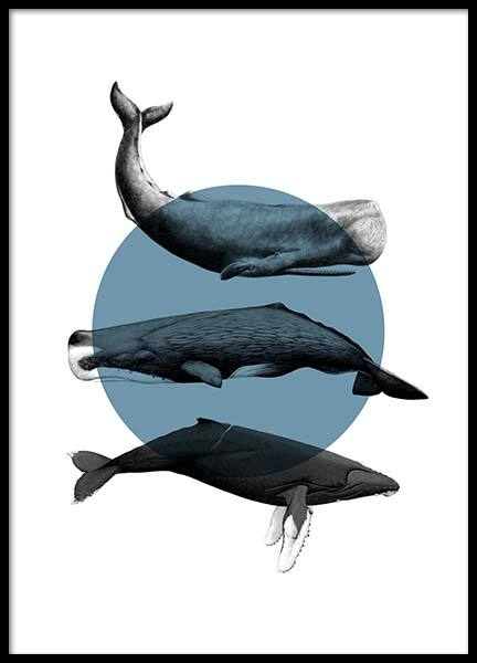Whales Graphic Poster i gruppen Posters / Djur hos Desenio AB (10033)