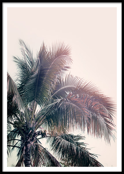 A Palm Tree Dream Poster i gruppen Posters  / Fotokonst hos Desenio AB (10169)