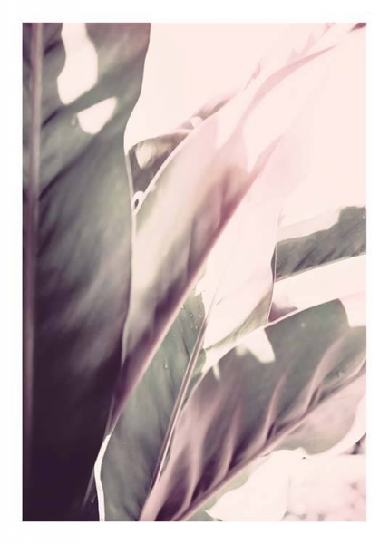 Soft Jungle Two Poster i gruppen Posters  / Botaniska hos Desenio AB (10176)