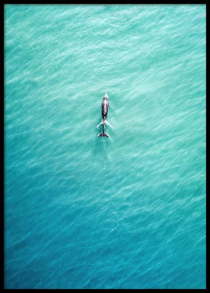 Dolphin From Above Poster i gruppen Posters  / Storlekar / 50x70cm hos Desenio AB (10230)