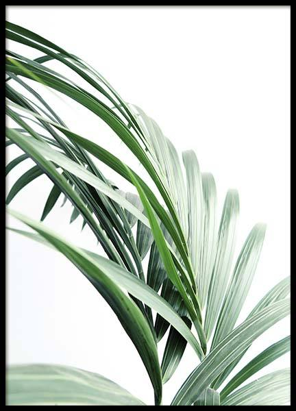 Palm Tree Leaves Close Up Poster i gruppen Posters  / Storlekar / 70x100cm hos Desenio AB (10244)