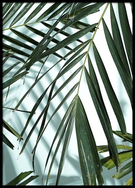 Palm Leaves Shadow No1 Poster i gruppen Posters  / Fotokonst hos Desenio AB (10284)