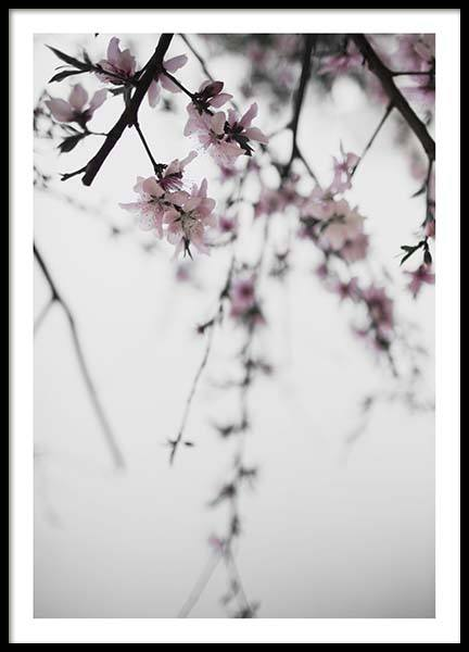 Cherry Branches No. 2 Poster i gruppen Posters  / Storlekar / 50x70cm hos Desenio AB (10330)