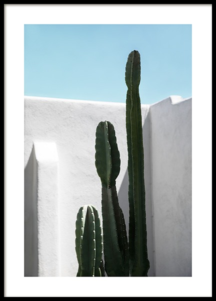 Cactus Wall Poster i gruppen Posters / Fotokonst hos Desenio AB (10792)