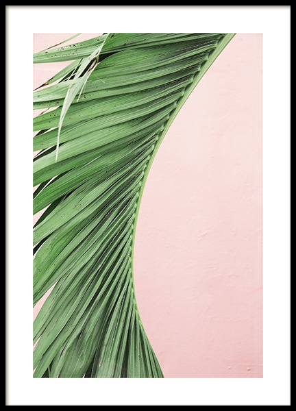 Pink and Green Palm No1 Poster i gruppen Posters  / Botaniska hos Desenio AB (10855)