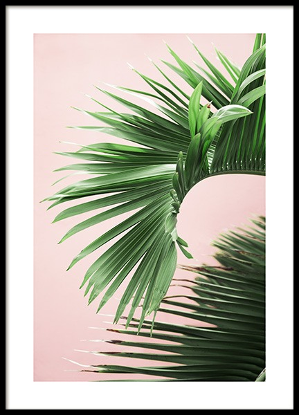 Pink and Green Palm No2 Poster i gruppen Nyheter hos Desenio AB (10856)