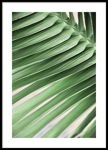Pink and Green Palm No3 Poster i gruppen Posters  / Botaniska hos Desenio AB (10857)