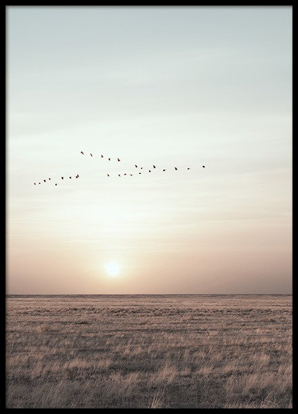 Field Sunset Poster