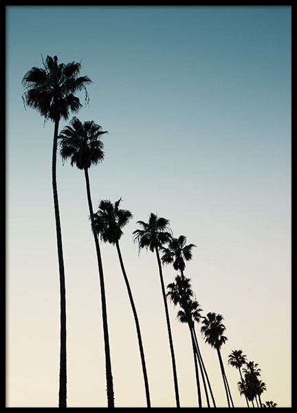 Palm Row Sunset Poster