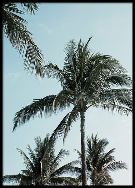 Tropical Palms No1 Poster