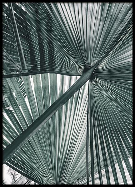 Tropical Palm Leaves No1 Poster i gruppen Posters / Fotokonst hos Desenio AB (10979)