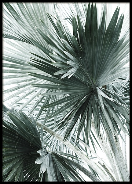 Tropical Palm Leaves No2 Poster i gruppen Posters  / Botaniska hos Desenio AB (10980)