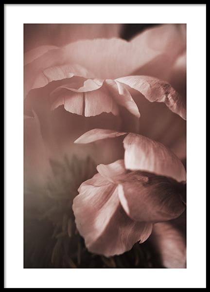 Soft Peony Poster