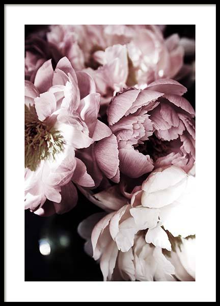 Dreamy Peony No3 Poster i gruppen Posters / Fotokonst hos Desenio AB (11777)