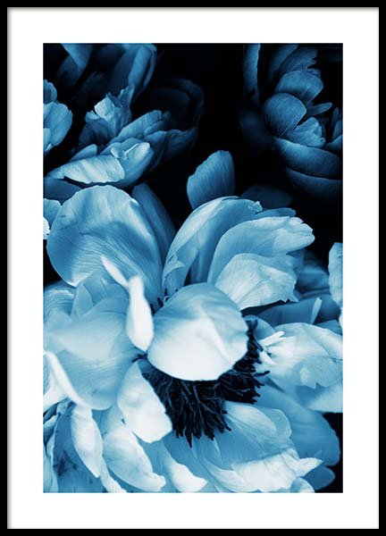 Blue Peony No1 Poster i gruppen Posters  / Fotokonst hos Desenio AB (11778)