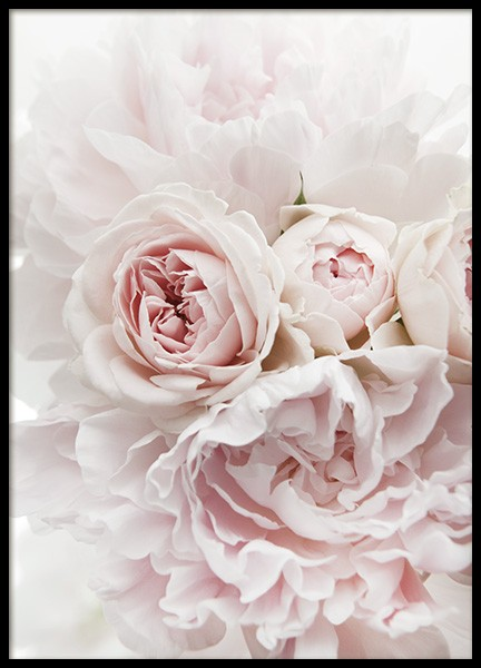 Peonies and Roses Poster i gruppen Posters  / Fotokonst hos Desenio AB (11791)