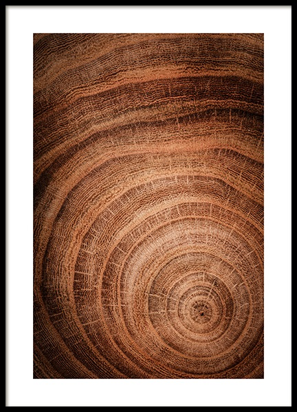 Growth Rings Poster