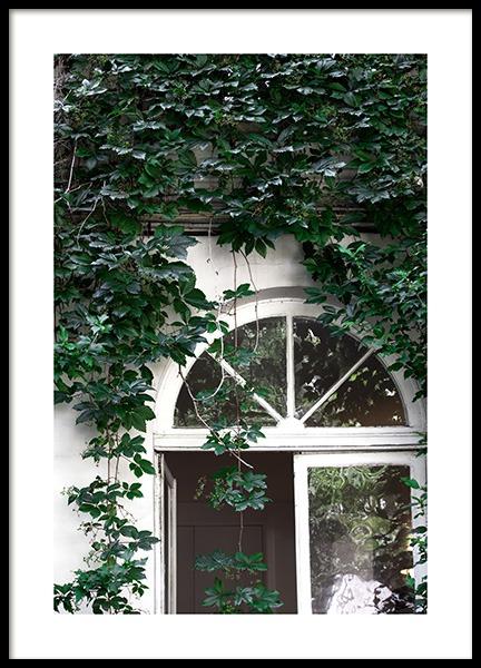 Climbing Ivy No1 Poster