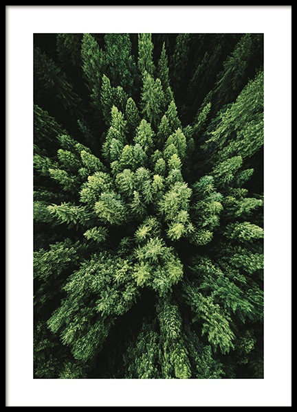 Aerial Forest Poster