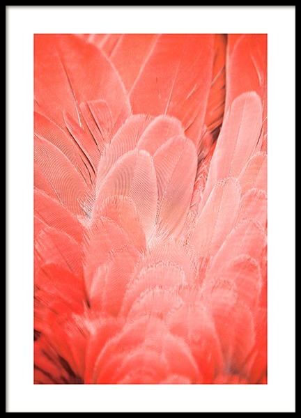 Coral Feathers Poster i gruppen Posters  / Storlekar / 50x70cm hos Desenio AB (12238)