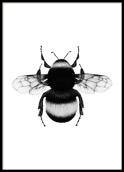 Bumblebee Drawing Poster i gruppen Posters  / Illustrationer hos Desenio AB (12309)