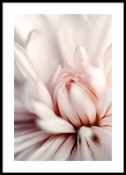 Pink Dahlia Close up Poster