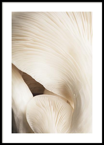 Beige Mushrooms Poster