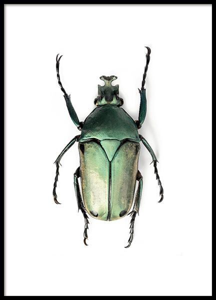 Green Insect Poster