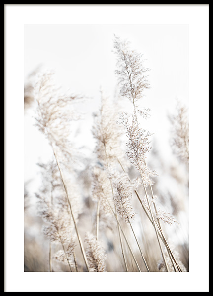 In the Reeds No2 Poster
