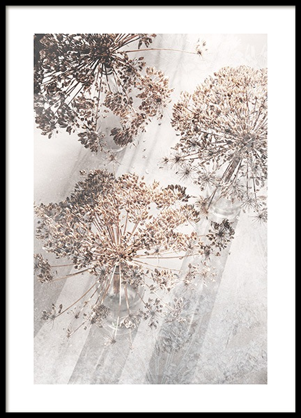 Dried Giant Hogweed No3 Poster i gruppen Posters  / Fotokonst hos Desenio AB (12665)