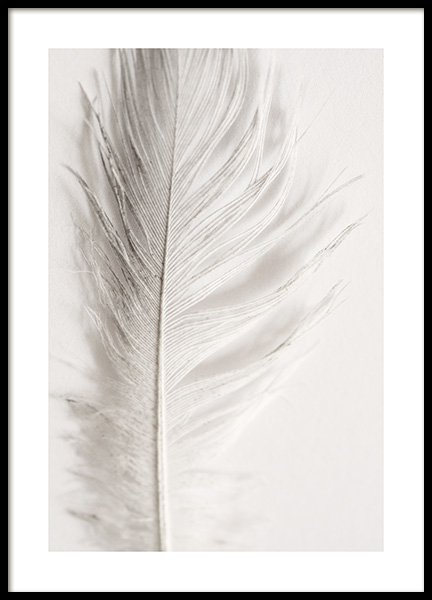Angel Feather Poster i gruppen Posters / Fotokonst hos Desenio AB (12983)
