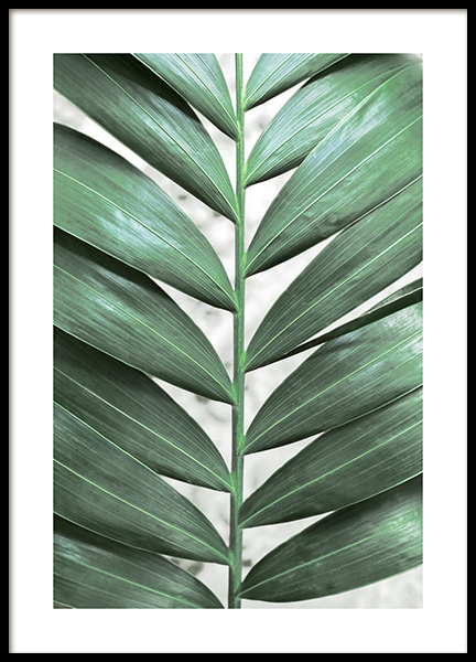 Detailed Jungle Leaf Poster i gruppen Posters  / Fotokonst hos Desenio AB (13070)