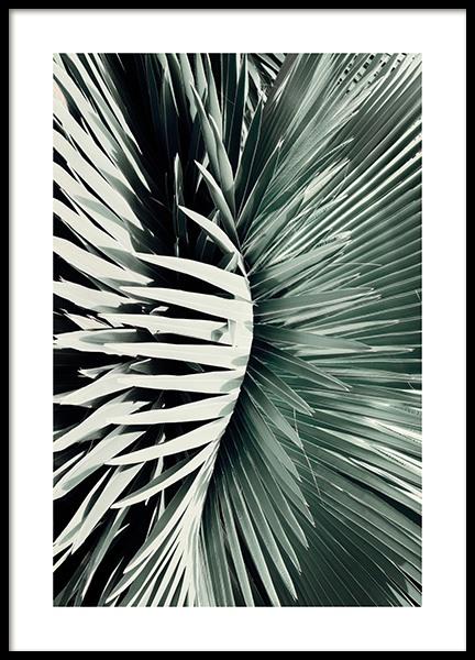 Fan Leaves Poster