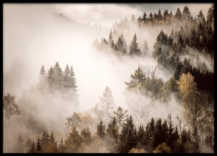 Misty Autumn Forest Poster