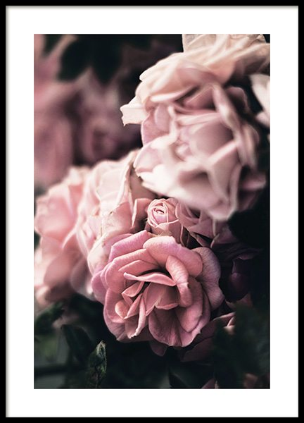 Delicate Rose Poster