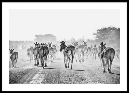 Zebra Traffic Poster