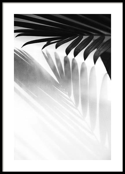 Palm Shadow B&W Poster