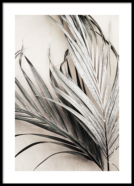 Dry Palm Leaves No3 Poster i gruppen  hos Desenio AB (13672)