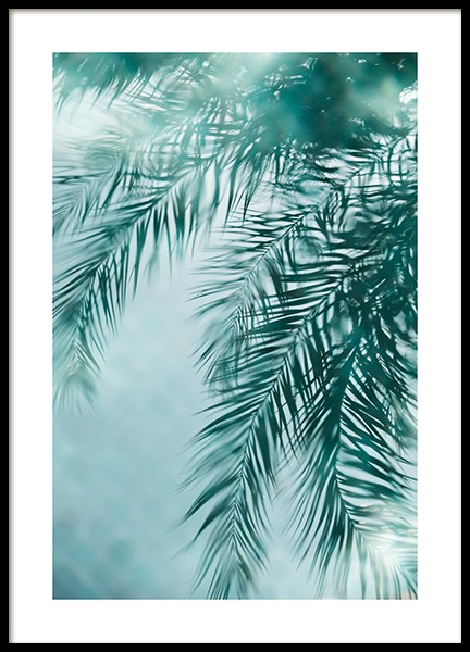 Palm Reflection Poster