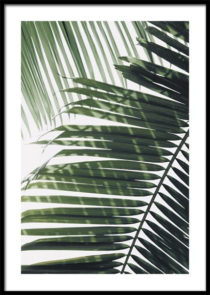 Sunray Palm Poster