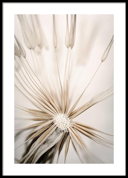 Beige Dandelion Poster
