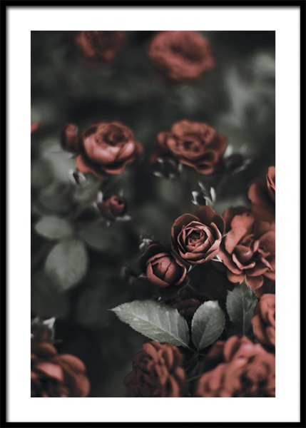 Roses In A Garden Poster