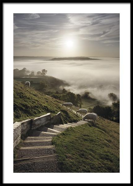 Somerset Sheep Poster