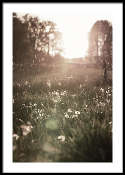 Meadow At Sunset Poster i gruppen Posters / Fotokonst hos Desenio AB (15031)