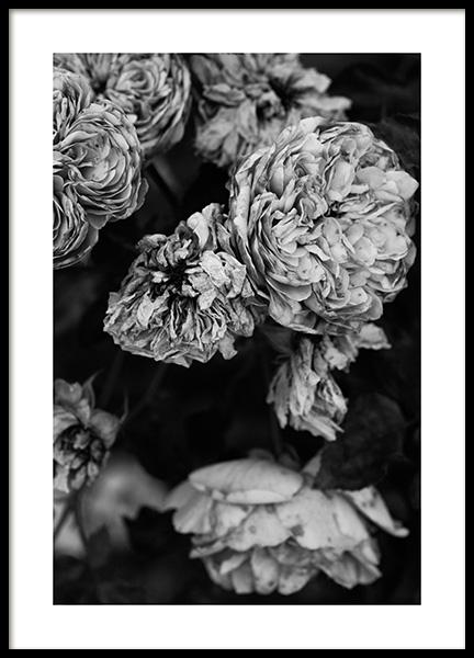Roses B&W Poster
