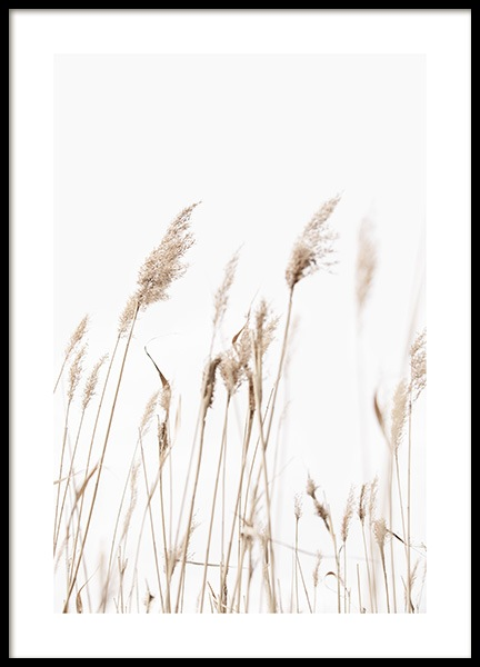 Sunny Reeds No1 Poster