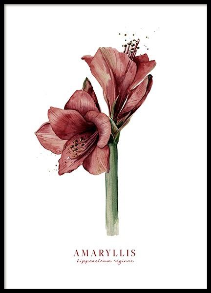 Watercolor Amaryllis Poster