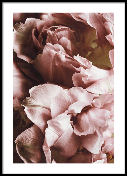 Rustic Roses No1 Poster