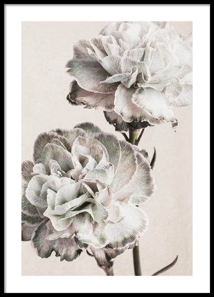 Rustic Carnation Poster