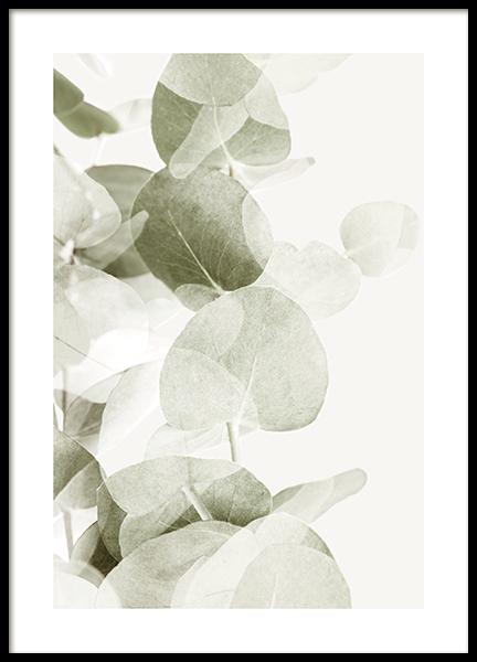 Abstract Eucalyptus No1 Poster
